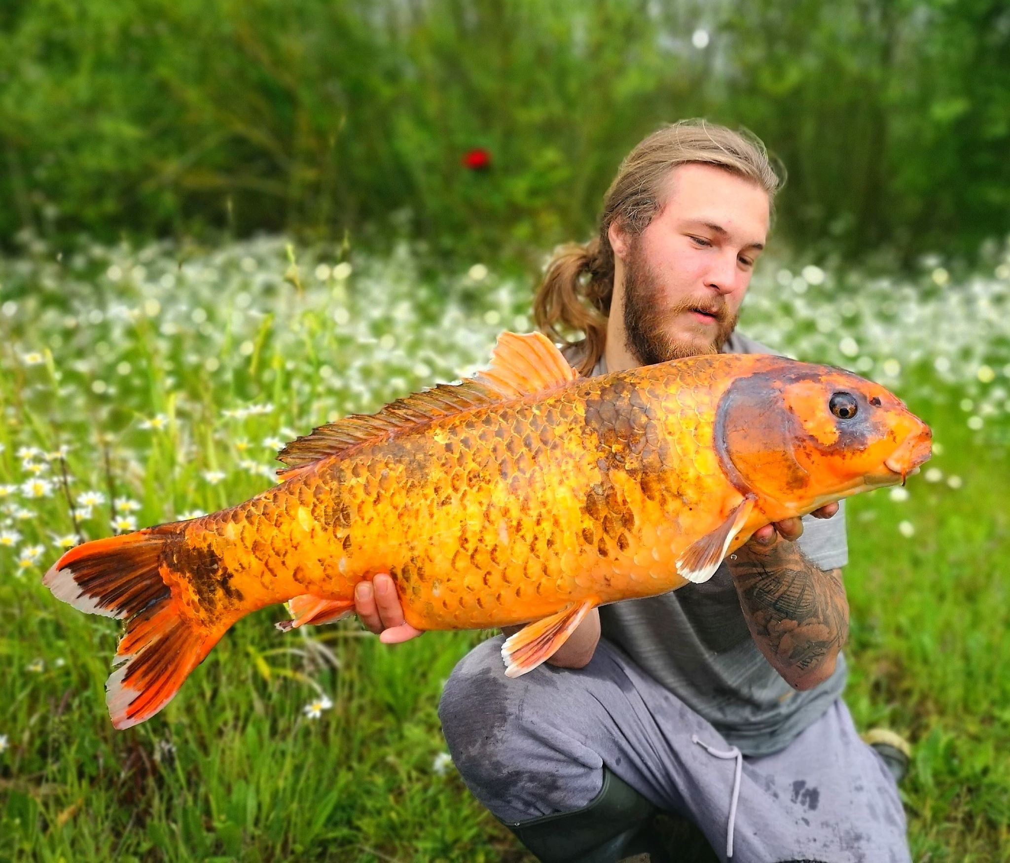 BILLY BLIP OUT 18LB KOI FROM H LAKES | CATCH OF THE WEEK 18/06/2020